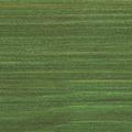 729 Jedľovo zelená