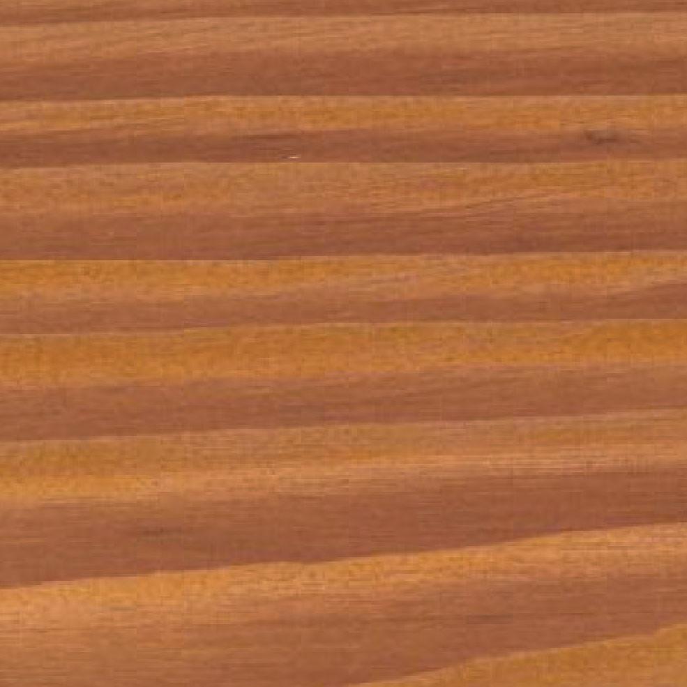 Pínia stredozemná