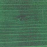 XHT 14 (zelený les)